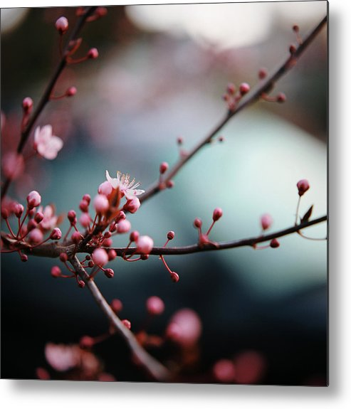 Vertical Metal Print featuring the photograph Close-up Of Plum Blossoms by Danielle D. Hughson