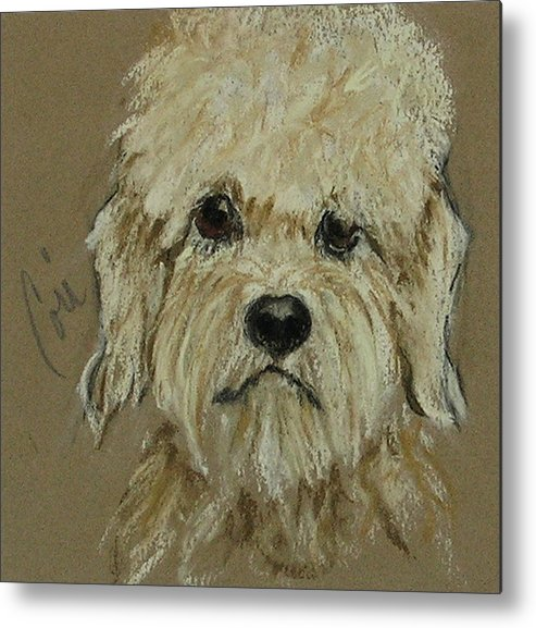 Dandie Dinmont Terrier Metal Print featuring the drawing Dandie by Cori Solomon