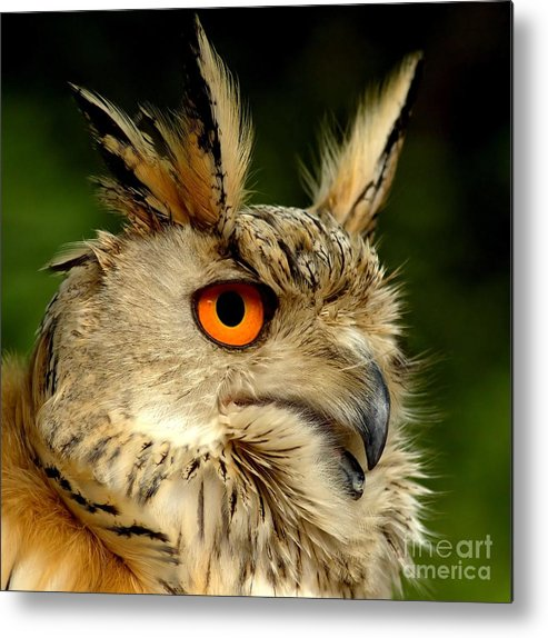 Wildlife Metal Print featuring the photograph Eagle Owl by Jacky Gerritsen