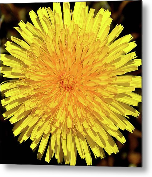 Dandelion Metal Print featuring the photograph Just A Weed by Mark Fuller