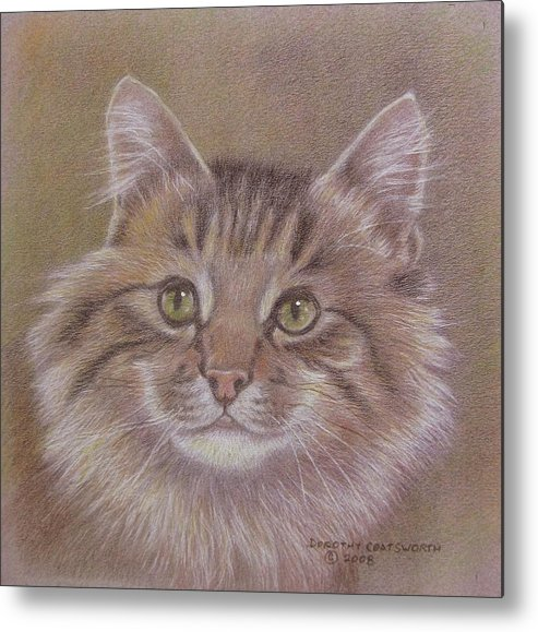 Metal Print featuring the painting Maine Coon Cat by Dorothy Coatsworth