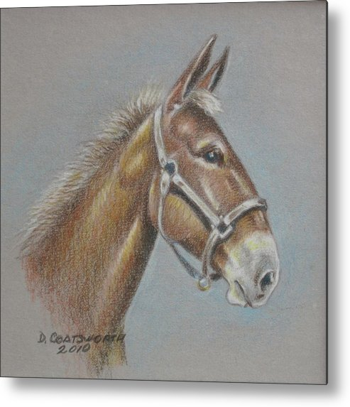 Metal Print featuring the painting Mule Head by Dorothy Coatsworth