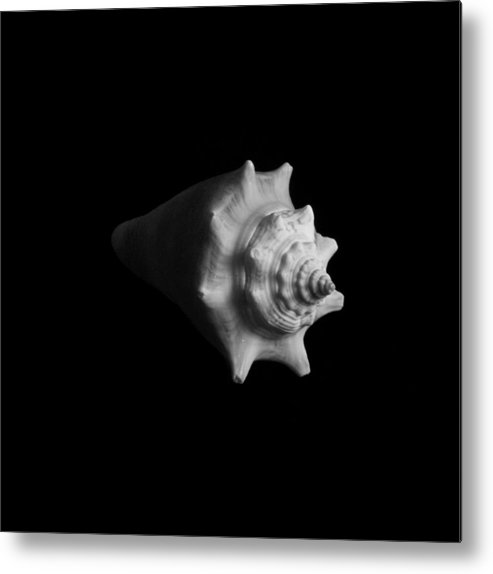 Seashell Metal Print featuring the photograph Shell No. 4 by Henry Krauzyk