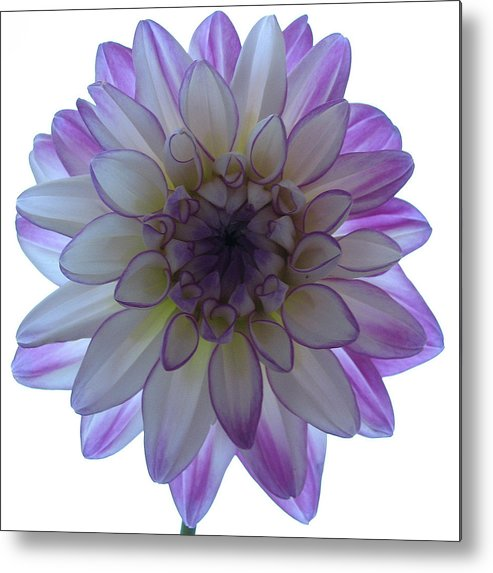 Flower Metal Print featuring the photograph Show Me Your Beauty by Kathy Roncarati
