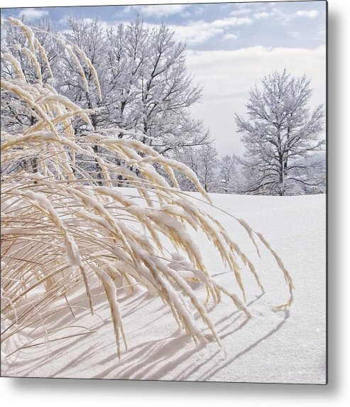 Frozen Metal Print featuring the photograph Snow Laden by LeAnne Perry