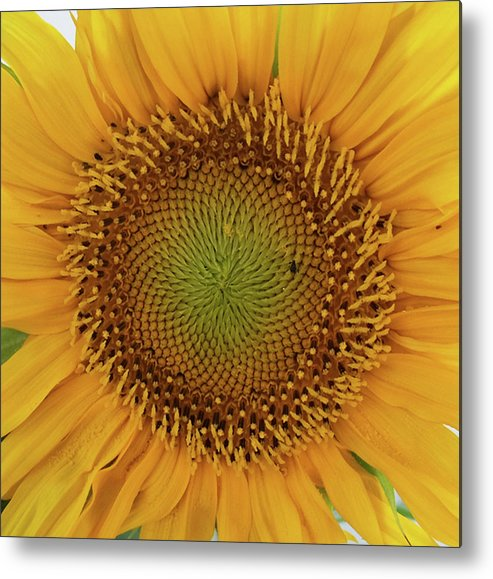 Yellow Metal Print featuring the photograph Sol by Dawn Chevoya