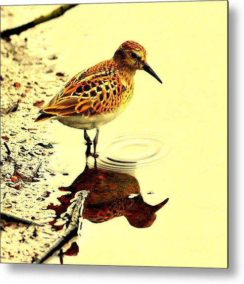 Lakeview Metal Print featuring the digital art Spotted Sandpiper by Aron Chervin