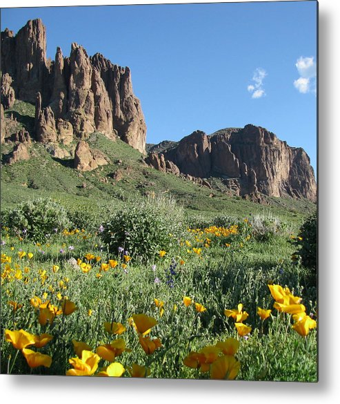 Landscape Metal Print featuring the photograph Springflowers by Gloria Byler