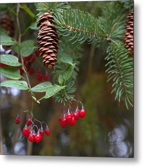 Fall Metal Print featuring the photograph The Pine by Mark Salamon