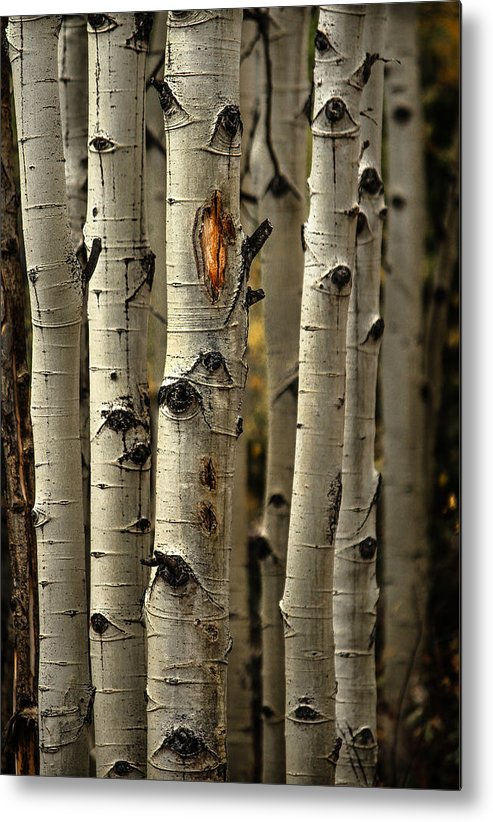 Aspens Metal Print featuring the photograph Aspens 4 2014 by Jim Painter