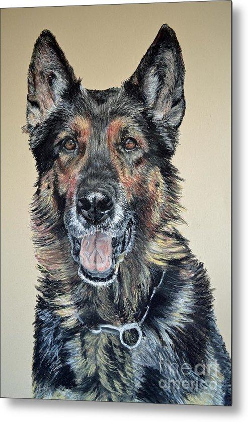 Schutzhund Metal Print featuring the pastel German Shepherd Jim by Ann Marie Chaffin