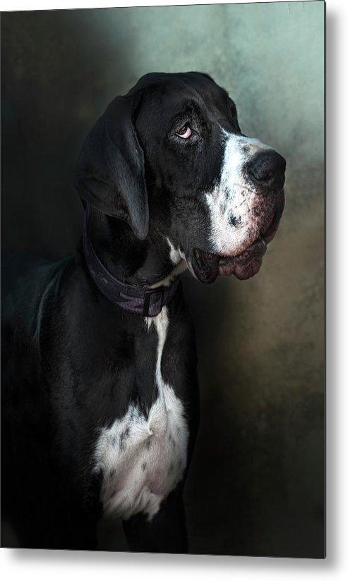 Pets Metal Print featuring the photograph Helga by Silversaltphoto.j.senosiain