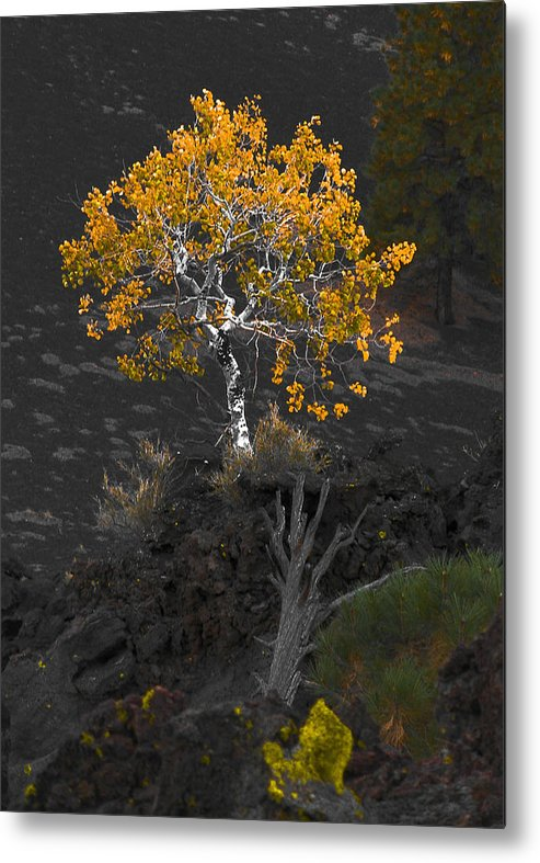 Tree Metal Print featuring the photograph Lava Field by Jim Painter