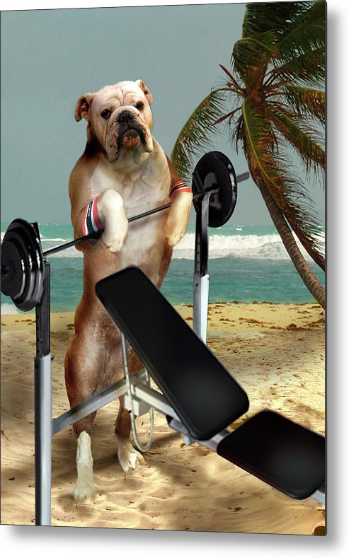 Pet Picture Dog Lifting Weights Print Metal Print featuring the painting Muscle boy Boxer lifting weights by Regina Femrite