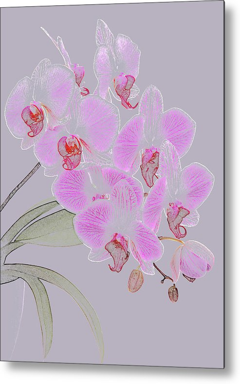 Haslemere Metal Print featuring the photograph Pink Orchids As Coloured Pencil Drawing by Rosemary Calvert