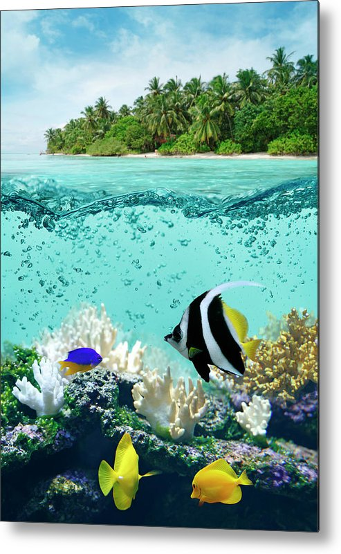 Bedrock Metal Print featuring the photograph Underwater Life In Tropical Sea by Narvikk