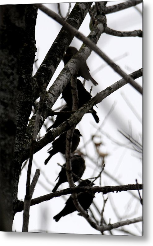 Black Birds Metal Print featuring the photograph Stacked by Wanda Brandon