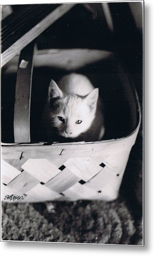 Cat Metal Print featuring the photograph Basket Full of Charlemagne by Seth Weaver