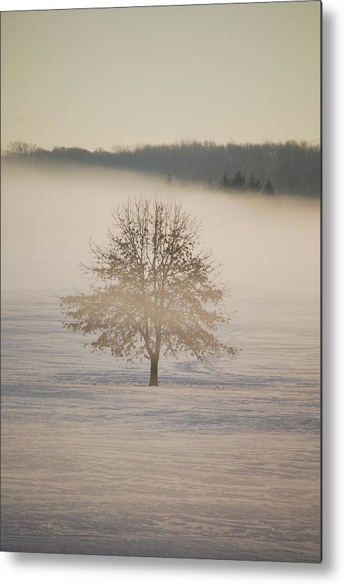 Winter Metal Print featuring the photograph Frozen by Peter McIntosh