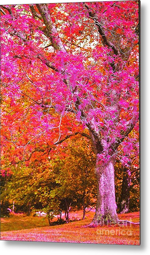 Fuschia Metal Print featuring the photograph Fuschia Tree by Nadine Rippelmeyer
