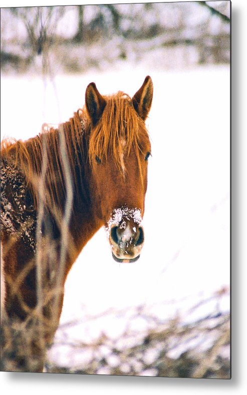 Horse Metal Print featuring the photograph Horse in winter by Steve Karol