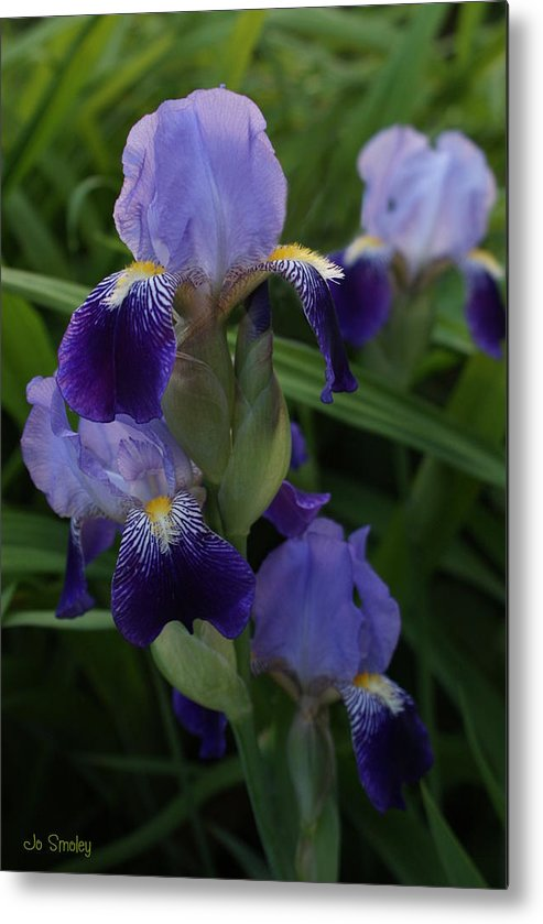 Iris Metal Print featuring the photograph Royal Purple Iris's by Joanne Smoley