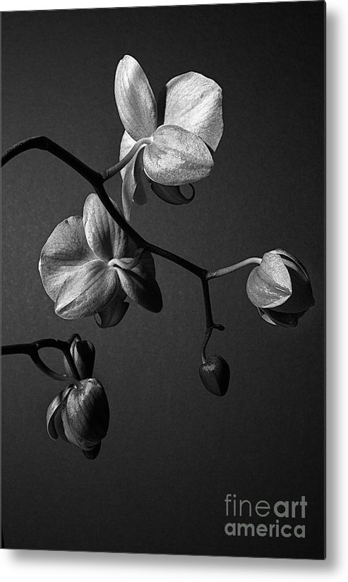 Orchid Metal Print featuring the photograph Scotopic Vision 3 - Orchid by Pete Hellmann