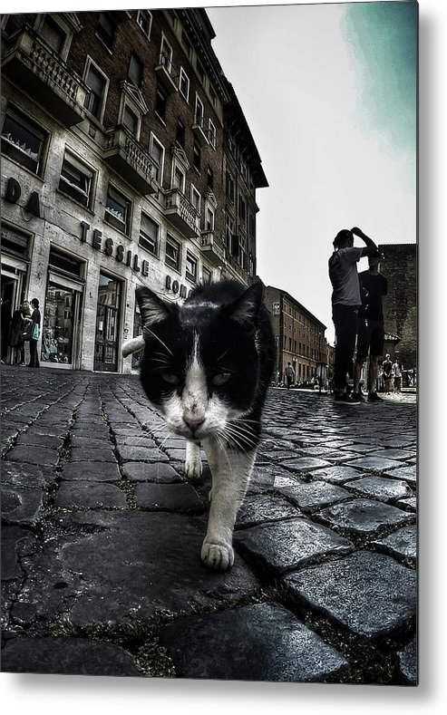 Cat Metal Print featuring the photograph Street Cat by Nicklas Gustafsson