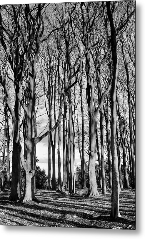Trees Metal Print featuring the photograph The trees by Phil Tomlinson