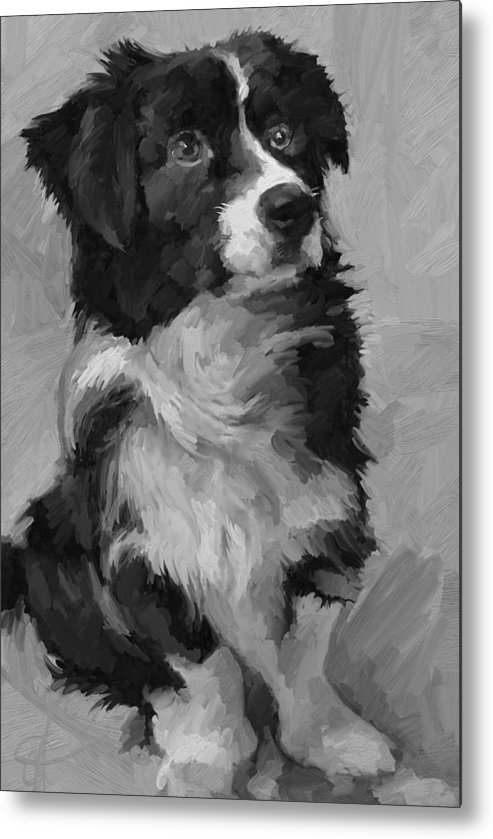 Border Metal Print featuring the painting Black and White Pup by Scott Waters