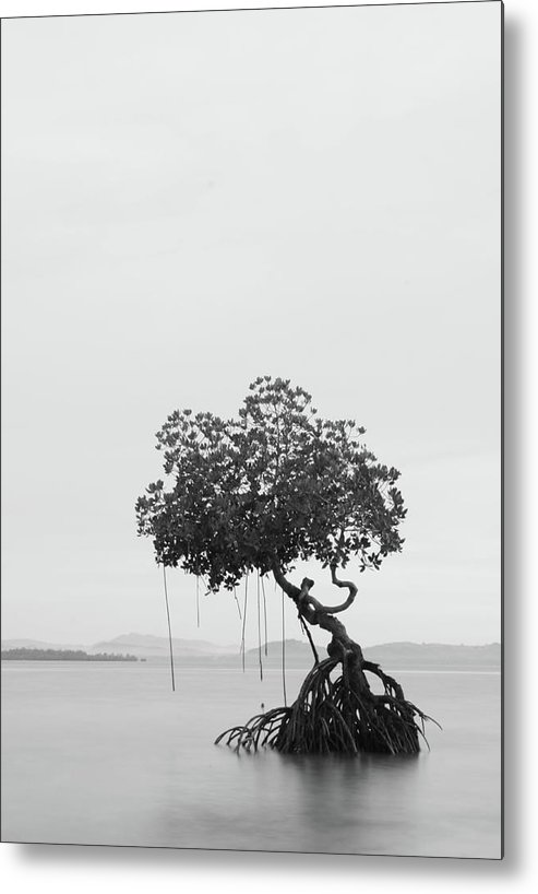 Scenics Metal Print featuring the photograph Lonely Tree by Ed Rojas