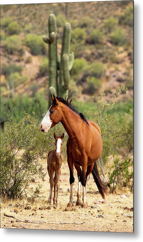 Arizona Metal Print featuring the photograph Pretty Mama by Cathy Franklin