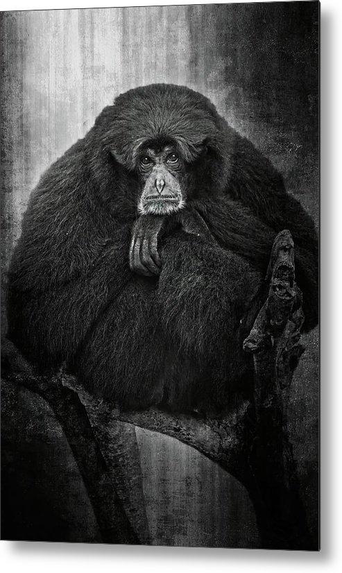 Monkey Metal Print featuring the digital art The Oracle by Steve DaPonte