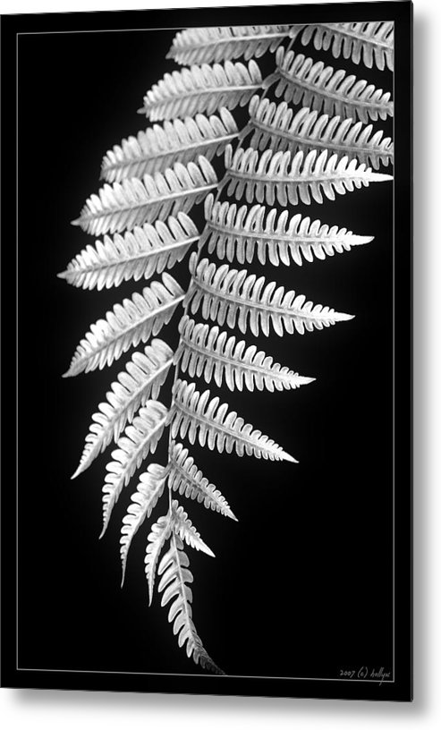 Australia; Floral Metal Print featuring the photograph Fern Dance by Holly Kempe