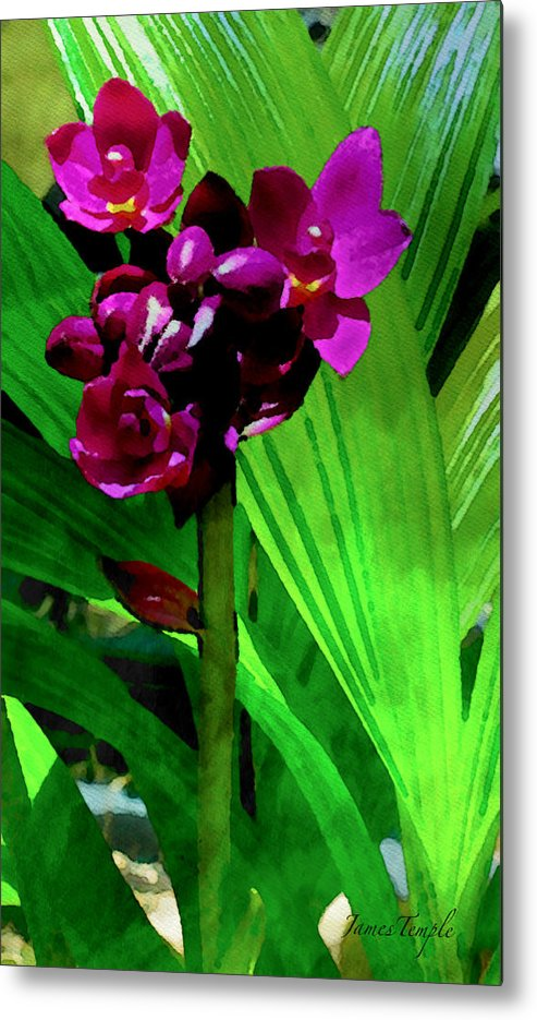 Natures Gift Metal Print featuring the digital art Mother Nature's Gift by James Temple