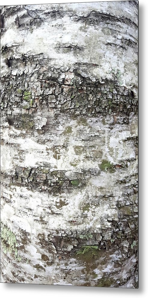 White Birch Bark Metal Print featuring the photograph White Birch Bark by Trevor Slauenwhite