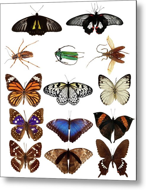 Common Blue Butterfly Metal Print featuring the photograph Butterflies And Beetles by Mashabuba