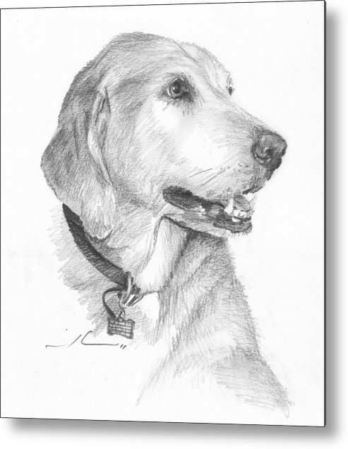 <a Href=http://miketheuer.com Target =_blank>www.miketheuer.com</a> Friendly Dog Pencil Portrait Metal Print featuring the drawing Friendly Dog Pencil Portrait by Mike Theuer