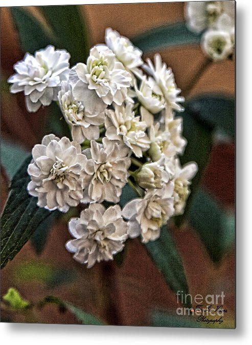 Floral Metal Print featuring the photograph Floral on Display by Linda Ebarb