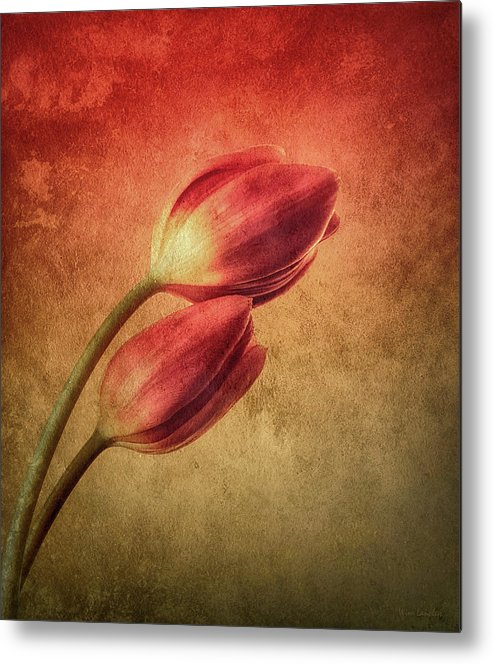 Tulips Metal Print featuring the photograph Colorful Tulips Textured by Wim Lanclus