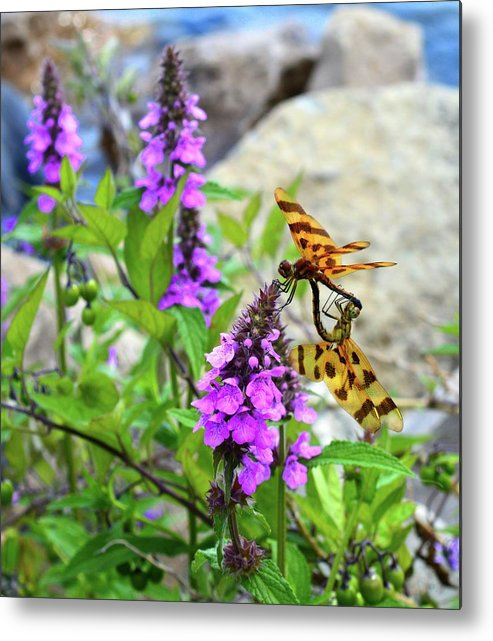 Abstract Metal Print featuring the photograph Dragonflies In Summer by Lyle Crump