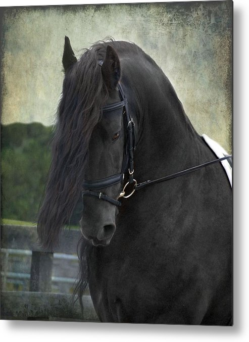 Horses Metal Print featuring the photograph Remme by Fran J Scott