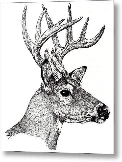 Deer Metal Print featuring the drawing Ten Point Buck by Debra Sandstrom