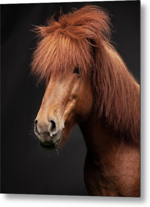 Horse Metal Print featuring the photograph Portrait Of Horse by Arctic-images