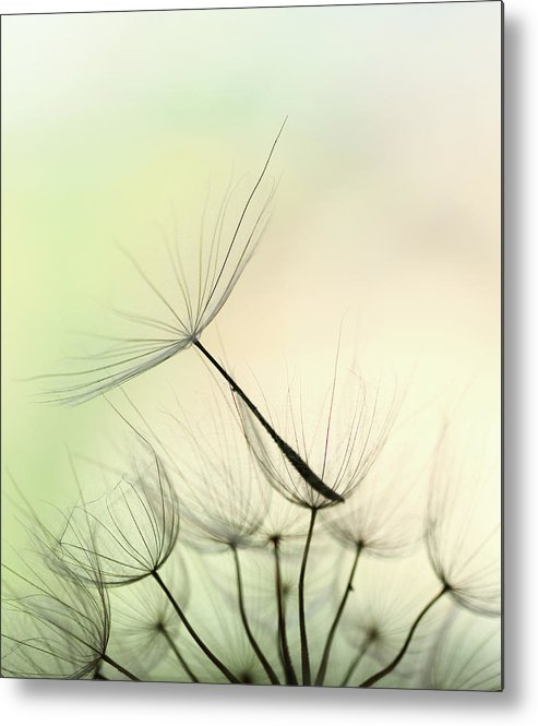 Single Flower Metal Print featuring the photograph Dandelion Seed by Jasmina007