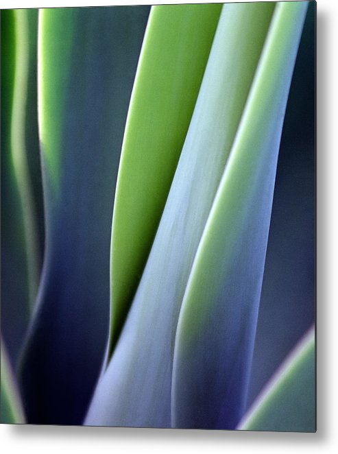 Sparse Metal Print featuring the photograph Green Smooth Leaves by Sergeo syd