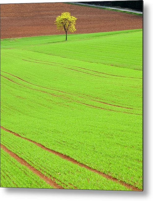 Outdoors Metal Print featuring the photograph Single Tree In Green Field by Henglein And Steets