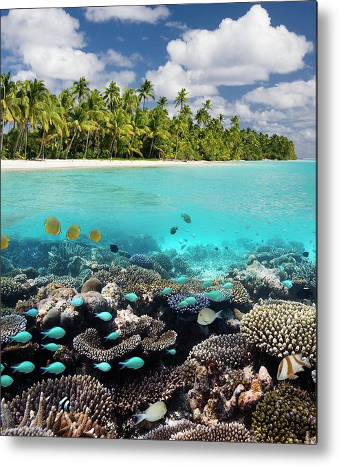 Underwater Metal Print featuring the photograph Tropical Paradise - The Maldives by Steve Allen