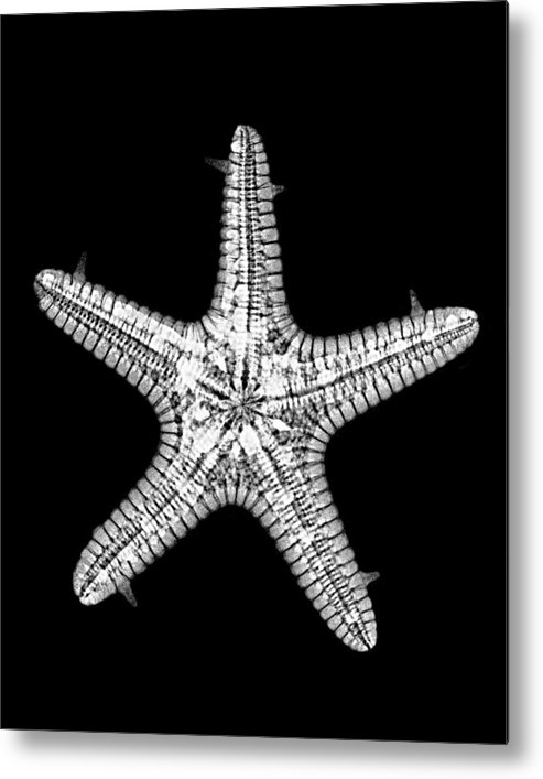 Sea Metal Print featuring the photograph African Star by William A Conklin