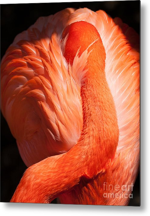 Flamingo Metal Print featuring the photograph Flamingo Resting by Dale Nelson